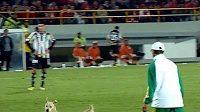 Na dobré tři minuty přerušilo rozradostnělé psisko v Bogotě osmifinále Jihoamerického poháru.