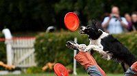 """""""Freestyle je mnohem náročnější na umění psa i hráče, ale proto je také o dost atraktivnější pro publikum,"""" říká Lucie Schönová."""