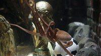 Chobotnice Paul s trofejí pro fotbalové mistry světa