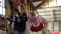 Sebastian Vettel jako střihač ovcí na australské farmě. Nebohé zvíře mu museli přidržet, jinak by si mistr světa na chleba nevydělal...