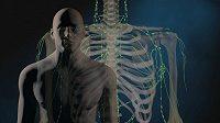 Lymfatický systém sportovce také potřebuje cílenou péči.