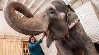 Během volna po sezóně stihla Zuzana Hejnová pokřtít i slonici Rání v liberecké zoo.