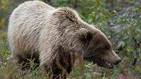Dospělý grizzly může mít až téměř 700 kilogramů, utéct mu je nemožné.