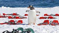 První maraton si duo Vabroušků užije mezi tučňáky. (ilustrační foto)