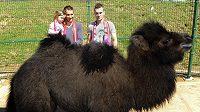 Viktor se jmenuje třítýdenní mládě velblouda dvouhrbého z plzeňské zoologické zahrady. Podle svého klubu ho pokřtili fotbalisté FC Viktoria Marek Bakoš (vlevo) a Radim Řezník. Pro Bakoše, který přišel se svou čtyřletou dcerou Laurou, byly křtiny také jedním z dárků k jeho třicetinám.