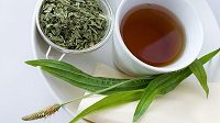 Jitrocel kopinatý obsahuje ze všech druhů této rostliny nejvíce účinných látek.