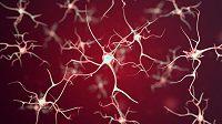 Také pro kondici našeho mozku je pohyb nepostradatelný.