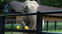 Slonice Citta z krakovské zoo.