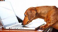 Na nejnovější trendy budete zírat jako jezevčík do klávesnice nového notebooku.