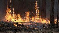 Austrálie bojuje s rozsáhlými lesními požáry.