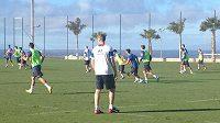 Lvíčata se začátkem ledna připravují pod palmami na Tenerife...