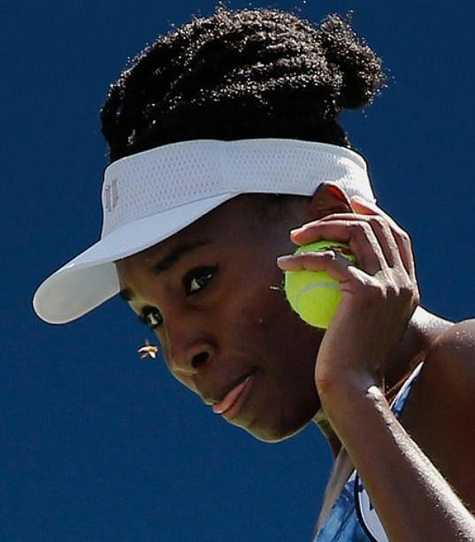 Venus Williamsová a nezvaná návštěvnice z říše hmyzu při utkání US Open.