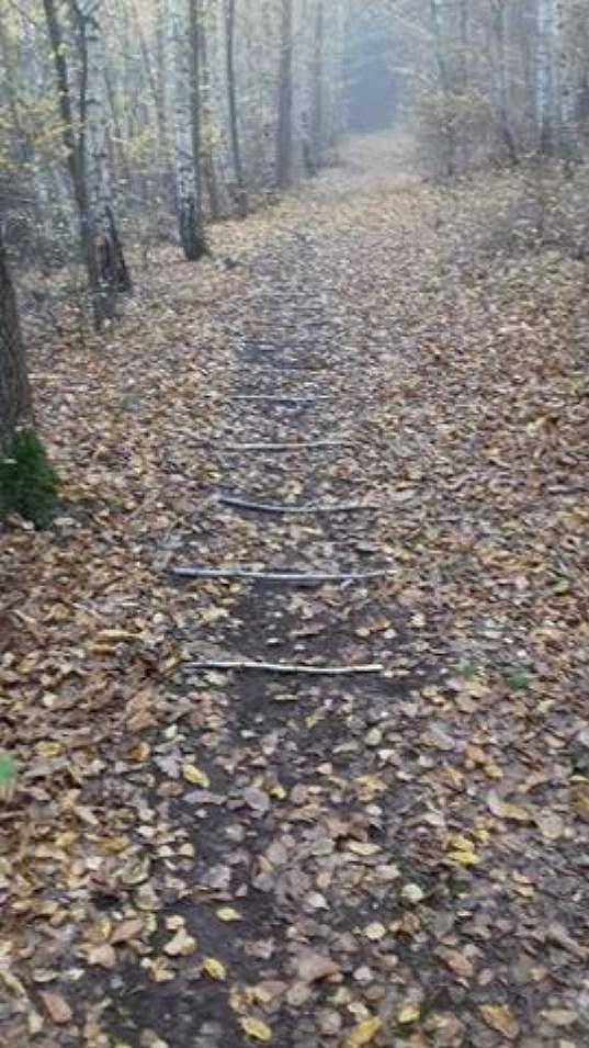 Frekvenční žebříček lesní víly Běhalky.