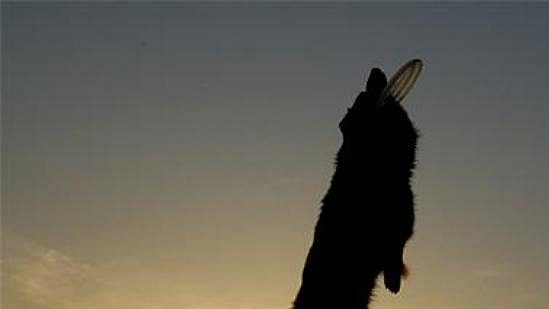 Dogfrisbee vzniklo ve Spojených státech v roce 1974, u nás se mu lidé oficiálně věnují od roku 2004.