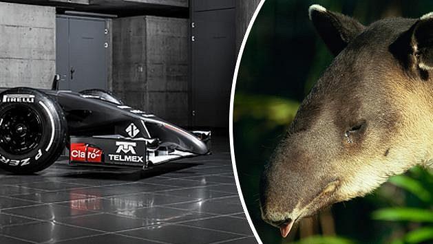 Sauber C33 připomíná tapíra.
