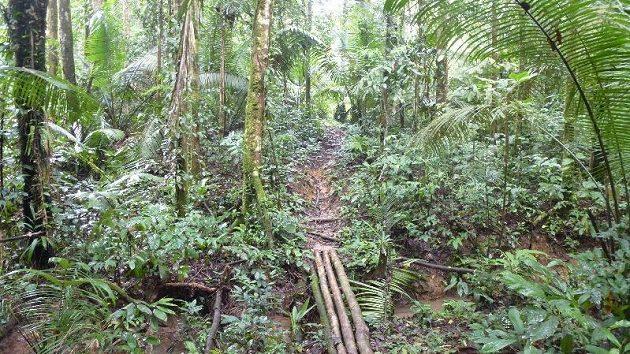 Běžecká stezka pralesem.