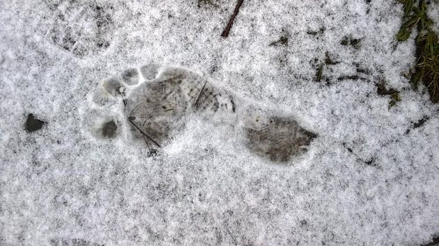 Běhat naboso se dá i v zimě.