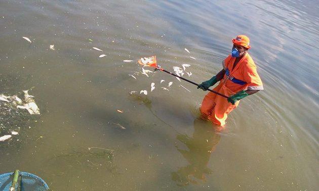 V rybářských holinách až po pás a s respirátory na ústech musí pracovníci hygienické služby až do kalných vod laguny.