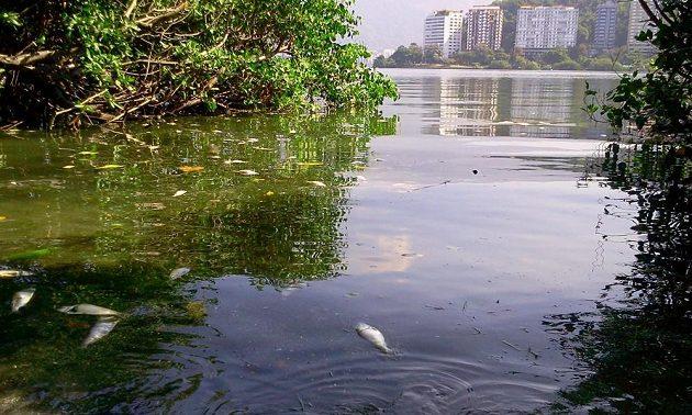 Následky ekologické havárie se pořád ještě odstraňují.