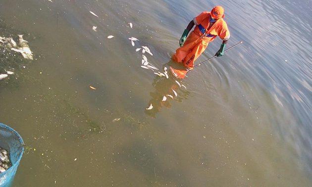 V rybářských holinách až po pás a s respirátory na ústech se noří do slané vody laguny.