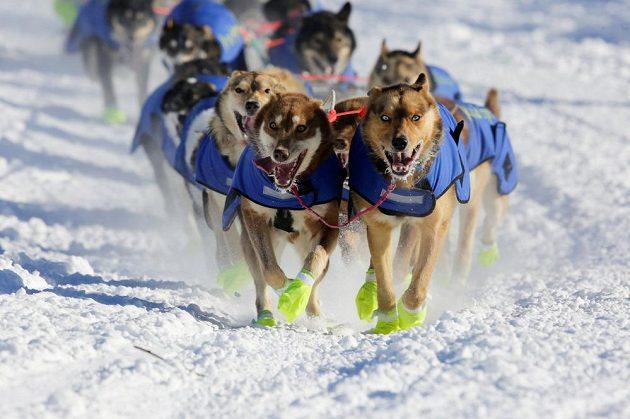 Iditarod 2017 - ilustrační snímek.