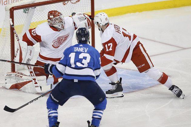 Brandon Tanev z Winnipegu (13) skóruje v zápase NHL s Detroitem. Zabránit v brance mu nedokázal český bek Filip Hronek (17) ani gólman Jonathan Bernier.