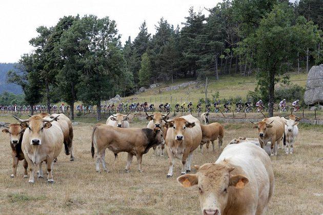 Pole se žlutým Britem Chrisem Froomem projíždí v 15. etapě Tour de France kolem jedné z farem.