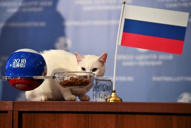 Kocour Achilles si vybral misku s jídlem, na které byla ruská vlajka