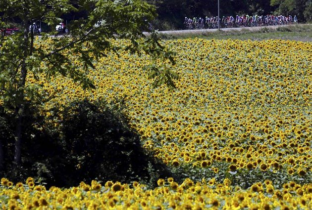 Cyklisté na trati čtrnácté etapy Tour de France.