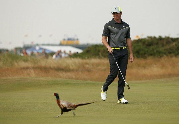 Rory McIlroy ze Severního Irska při British Open v Hoylake. Bažant ho nevyvedl z míry.