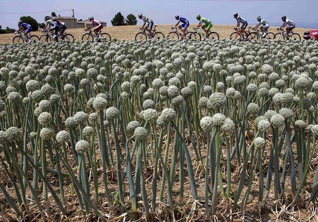Cyklisté v cibulovém poli