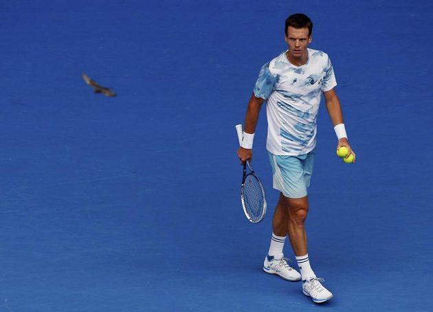Český tenista Tomáš Berdych sleduje letícího ptáka během čtvrtfinále Australian Open proti Rafaelu Nadalovi.