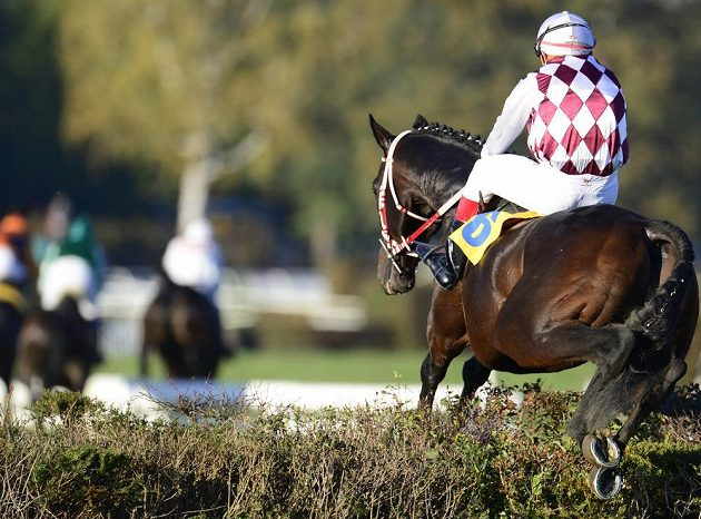 Josef Váňa s koněm Tiumenem překonává jednu z překážek na 123. Velké pardubické. Tu poslední však přeskočit bez zaváhání nedokázali a závod nedokončili.