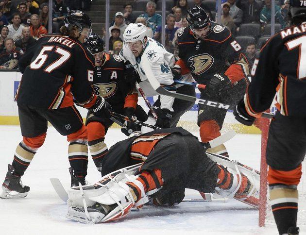 Útočník San Jose Sharks Tomáš Hertl (48) vstřelil gól v utkání s Anaheimem.