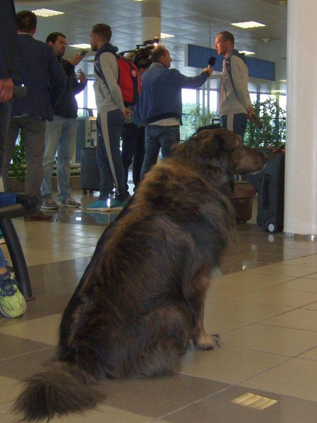 Pes Vilík měl odlet národního týmu pod kontrolou...