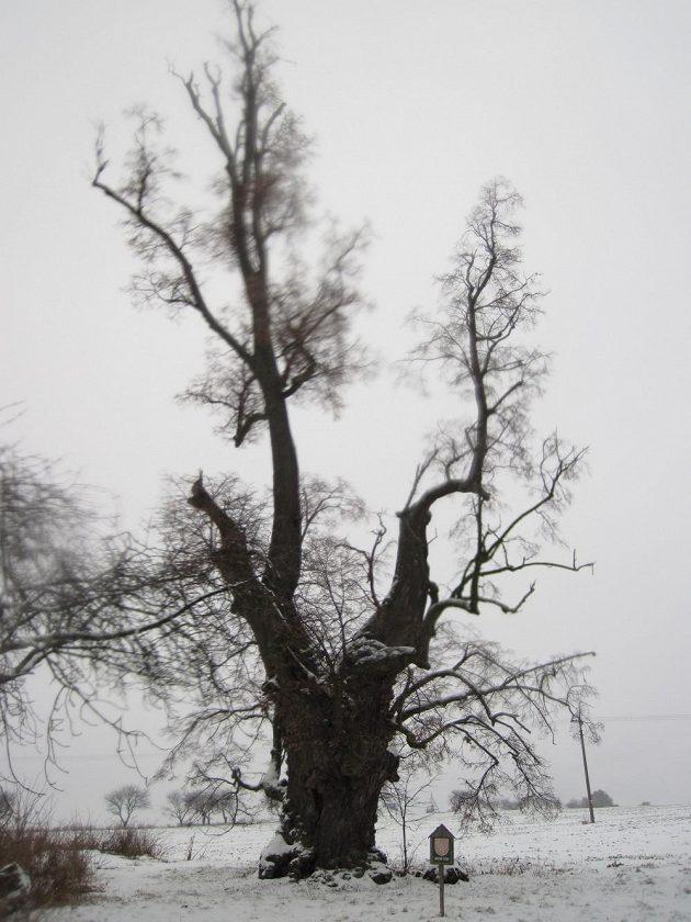 Památný strom se postaral o památné chvilky.