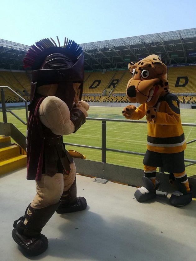 Maskot Sparty (vlevo) a Litvínova na fotbalovém stadionu Dynama Drážďany.