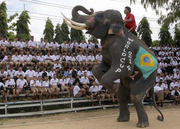 Brazilský chobotnatec musí být samozřejmě jednička! V Thajsku došlo v rámci kampaně před MS k fotbalovému zápasu slonů v barvách národních týmů proti studentům...