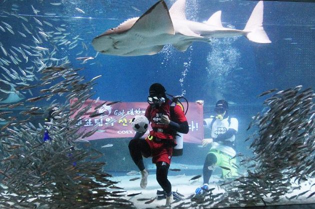 Potápěče si vzaly pod dohled i větší ryby...