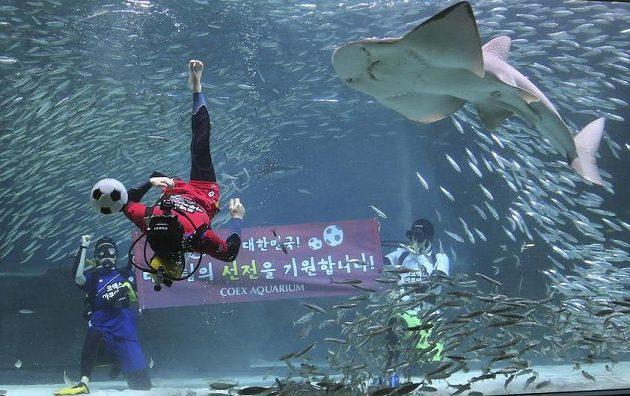 Kdo bude u balonu dřív? Potápěč, nebo žralok kytarovec křivoústý...?