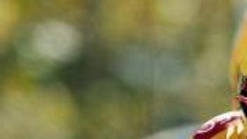 Španěl Isidro Nozal oblékne zlatý trikot vedoucího jezdce iv sobotní časovce.