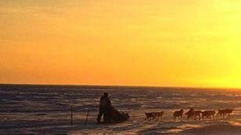 Mašer se spřežením přejíždí přes zamrzlé Beringovo moře nedaleko Nome.