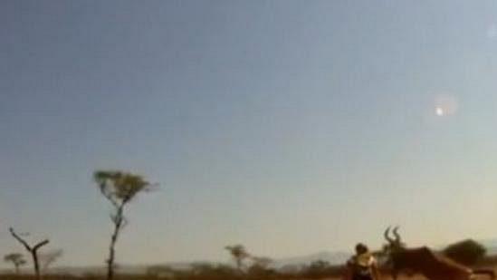 Antilopa převálcovala cyklistu