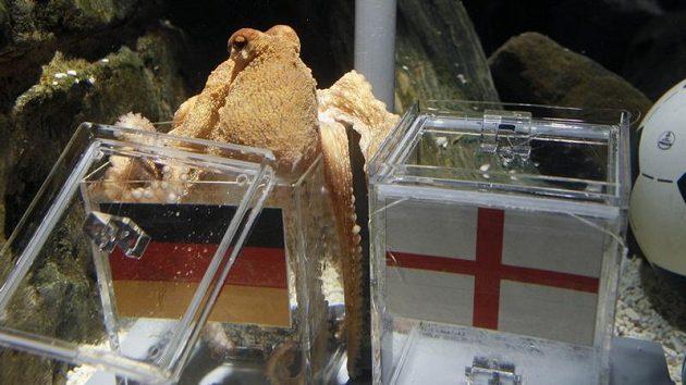 Chobotnice Paul takto předpověděla německé vítězství - ilustrační foto.