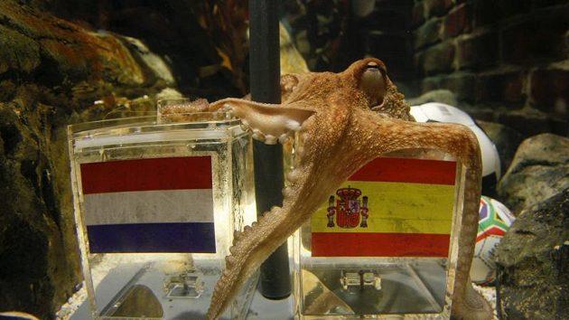 Paul si leze pro žrádlo do nádoby se španělskou vlajkou.