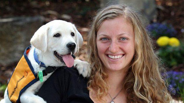 Petra Kvitová během turnaje v Melbourne, kde ji dělala společnost i štěňata Dustin a Dino.