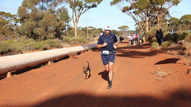 Krátké nohy, velké odhodlání – pes Stormy zdolal v Austrálii půlmaraton.