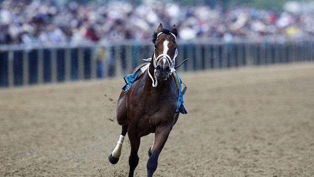 Kůň Bodexpress běží už bez svého žokeje Johna Velazqueze v závodu Preakness Stakes.