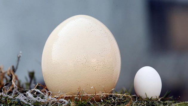 Pštrosí vejce a slepičí vajíčko. Bílovinu najdete v obou. Kde více?