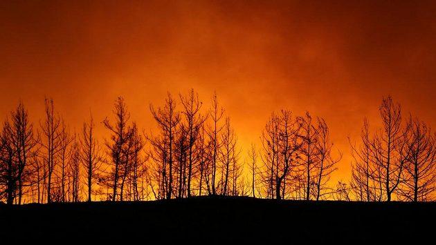 Fotbalisté tureckého klubu Fenerbahce Istanbul se rozhodli pomoci s obnovou lesních porostů v provincii Antalya, kterou tento týden postihly rozsáhlé lesní požáry.